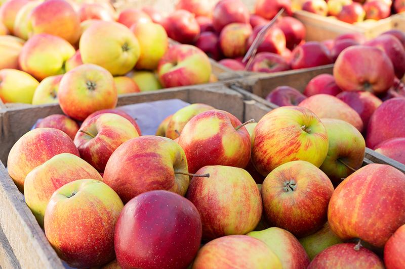 Apple varieties, which apple is best?