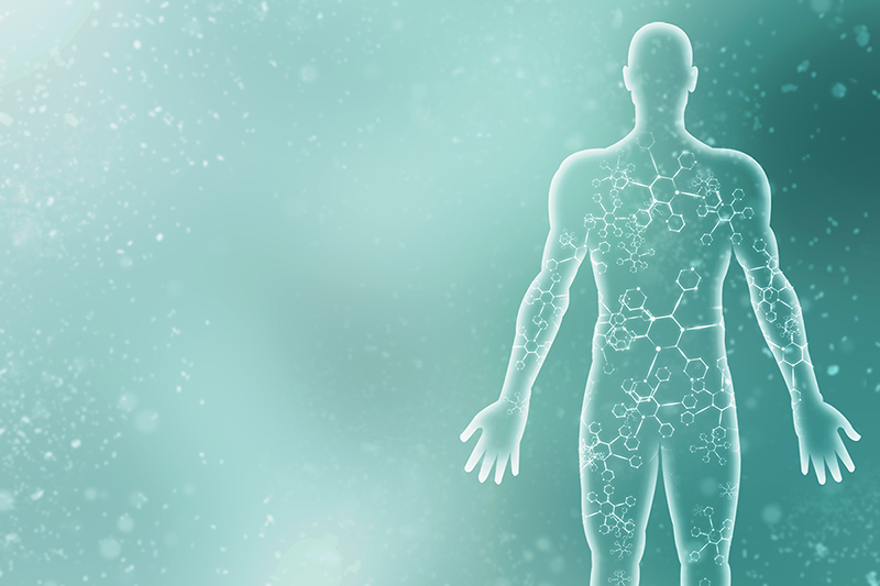 human body, male, interesting facts about the human body
