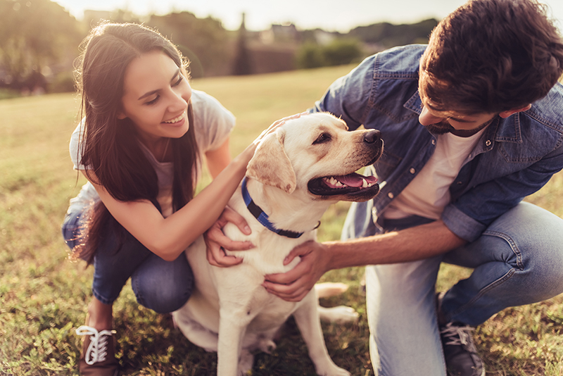 Couple with their dog, how to stay positive during hard times
