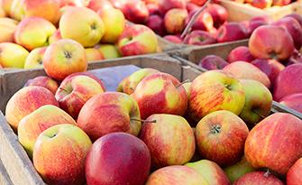 Apple varieties, which apple is best? sm