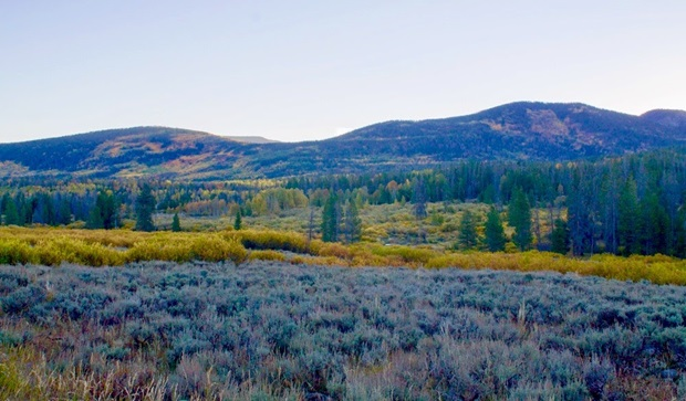 meadow_colors